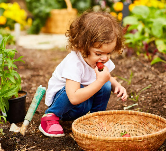 Child eating strawberries whilst gardening promoting Tynedale Insurance Broker's blog